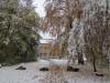 Schneefall im Oktober: Herbstwinter 3 (Foto: Monika Selig)